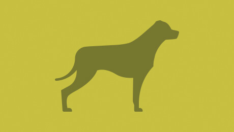 Green dog logo